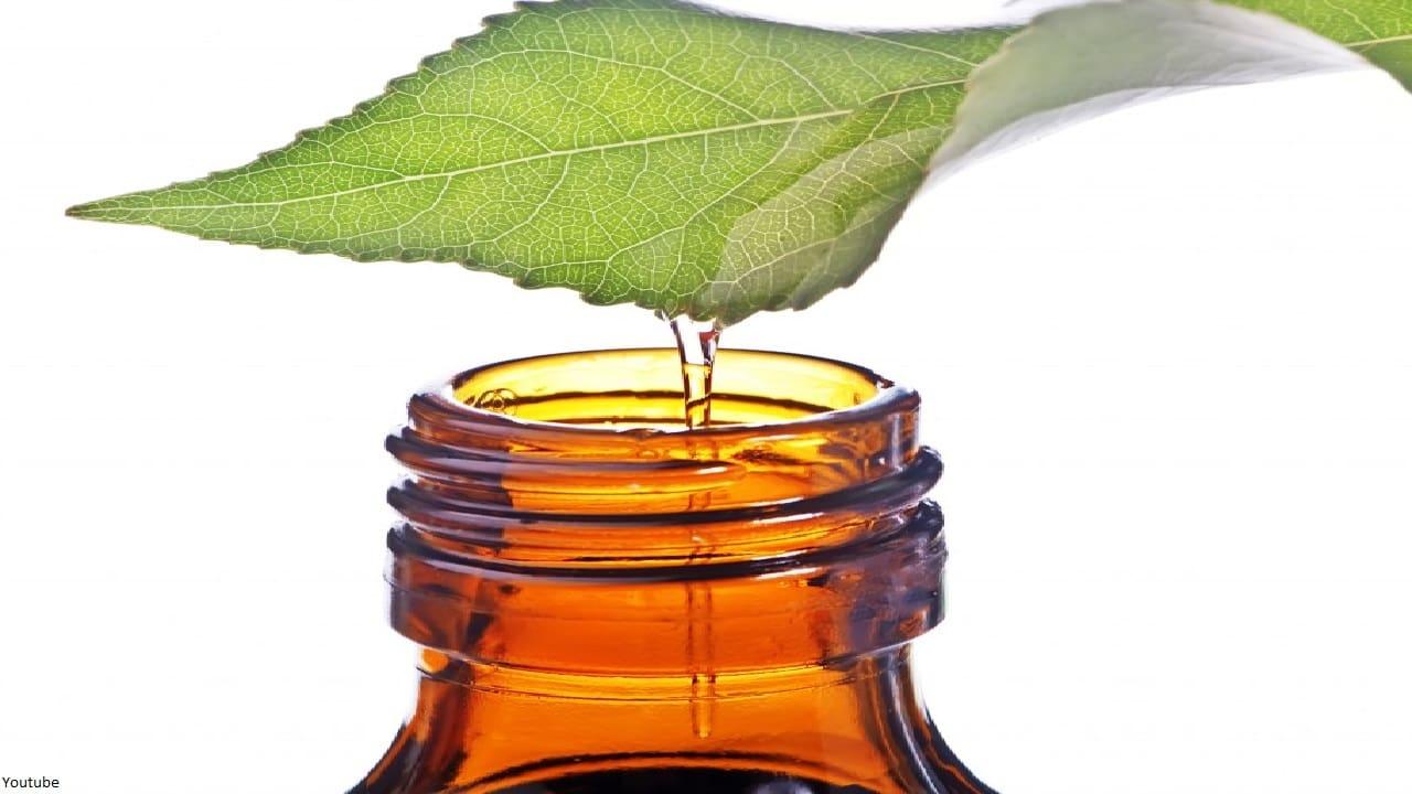 ¿Quieres evitar la caída del cabello? Usa estas mascarillas con aceite de árbol de té.