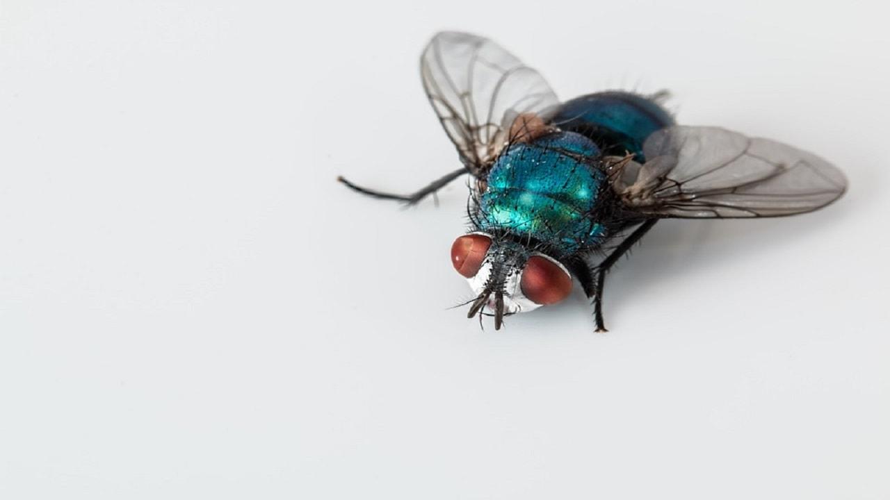 Algunos remedios caseros para repeler las moscas de tu hogar.