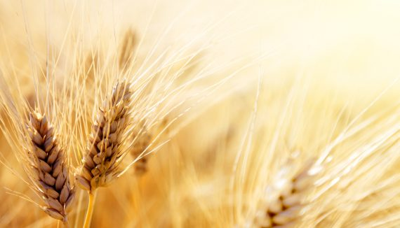 lo que siembras cosechas